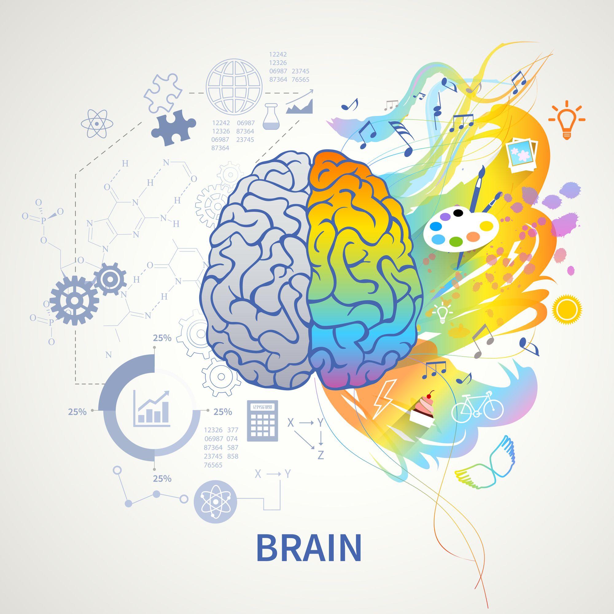 Gli emisferi cerebrali e le reti neurali