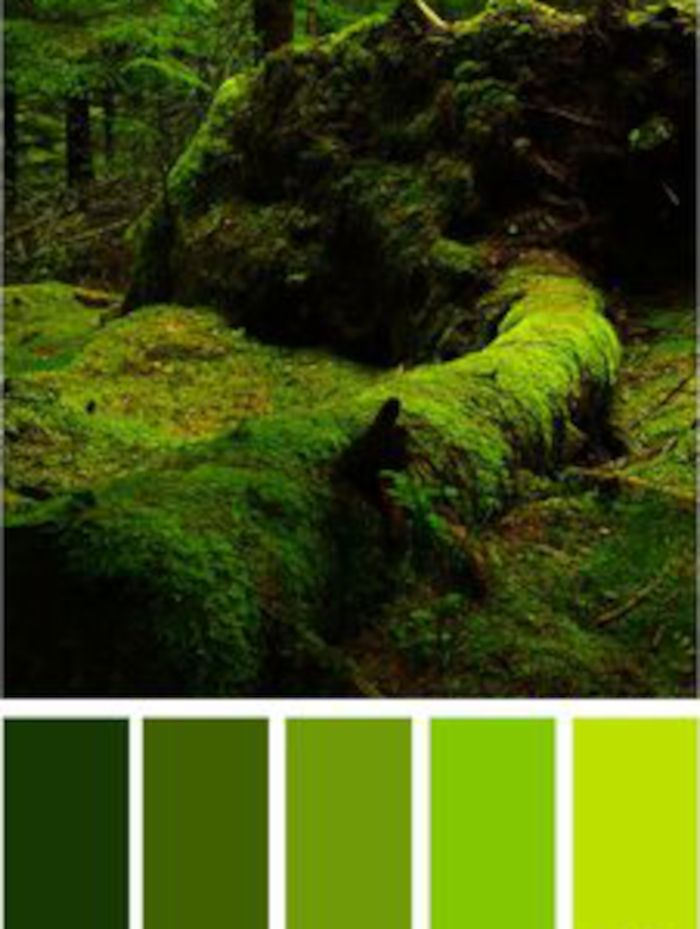 Il verde è energizzante e placa lo stress.